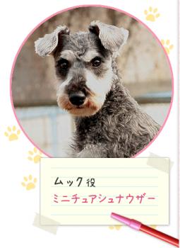 マルモ の おき て 犬