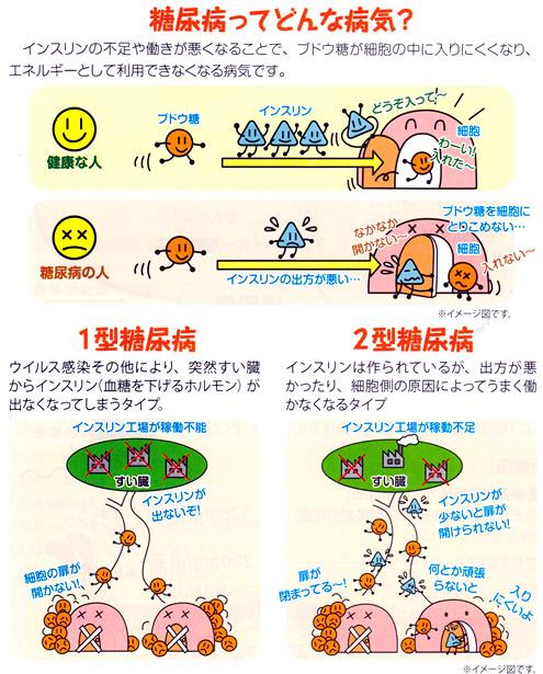 糖尿病の説明